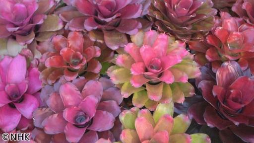 世界はほしいモノにあふれてる「アート&ユニーク!魅惑の植物を探す旅 タイ」[解][字]