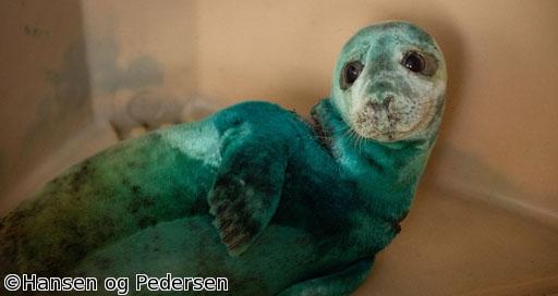 BS世界のドキュメンタリー「海からのSOS 傷ついた動物たちの記録」※字幕