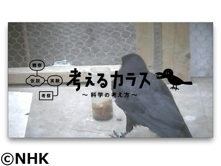 考えるカラス〜科学の考え方〜