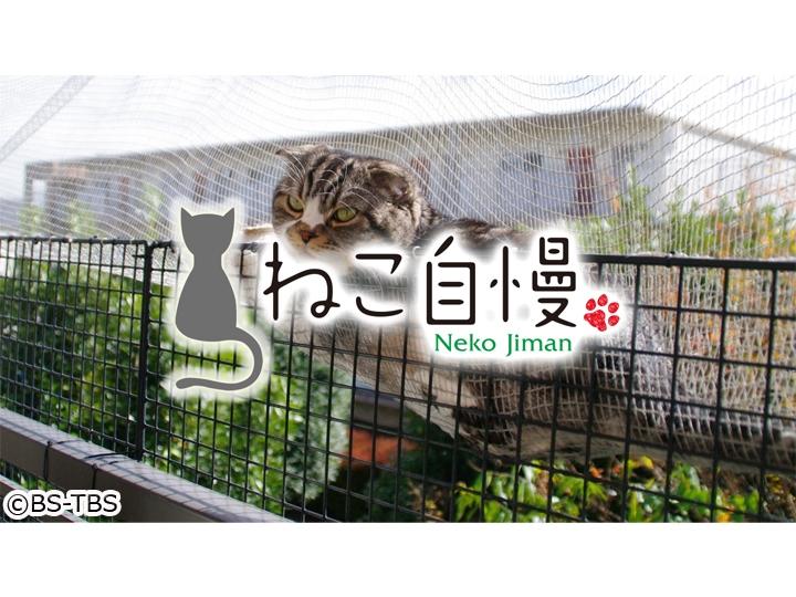 表 宮城 県 テレビ 番組